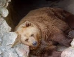 Which animals hibernate in winters? Spoiler: not only bears.